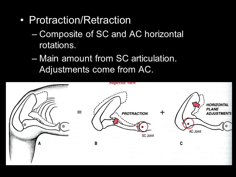 Protraction/Retraction –Composite of SC and AC horizontal rotations. –Main amount from SC articulation. Adjustments come from AC.