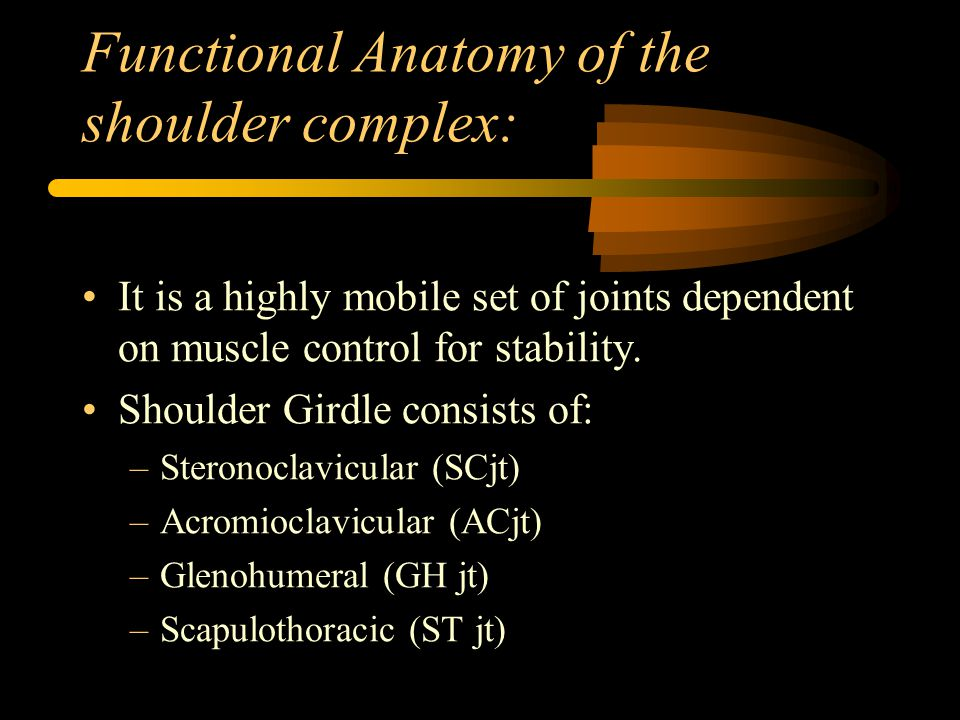 Functional Anatomy of the shoulder complex: It is a highly mobile set of joints dependent on muscle control for stability. Shoulder Girdle consists of
