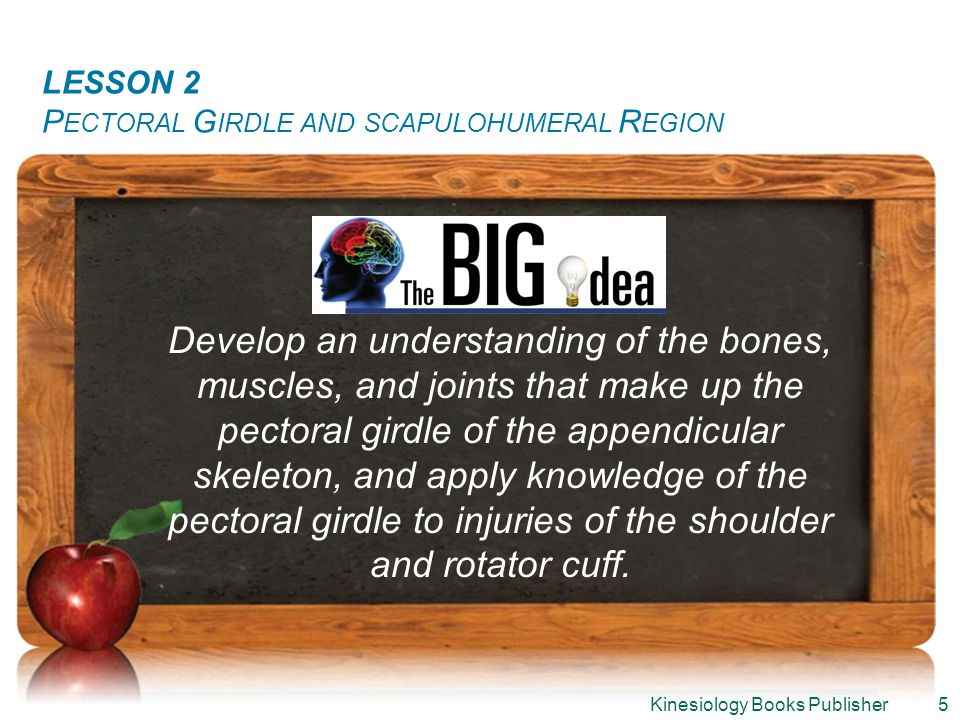 LESSON 1: T HE L ANGUAGE OF A NATOMY LESSON 2 P ECTORAL G IRDLE AND SCAPULOHUMERAL R EGION Develop an understanding of the bones, muscles, and joints that make up the pectoral girdle of the appendicular skeleton, and apply knowledge of the pectoral girdle to injuries of the shoulder and rotator cuff.