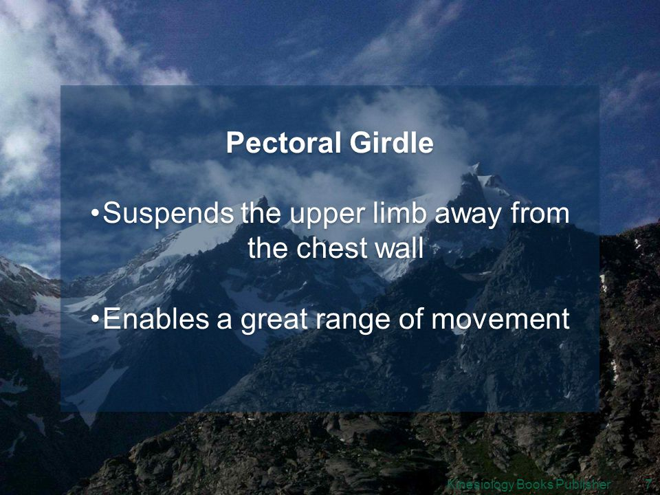 Kinesiology Books Publisher7 Pectoral Girdle Suspends the upper limb away from the chest wall Enables a great range of movement Pectoral Girdle Suspends the upper limb away from the chest wall Enables a great range of movement