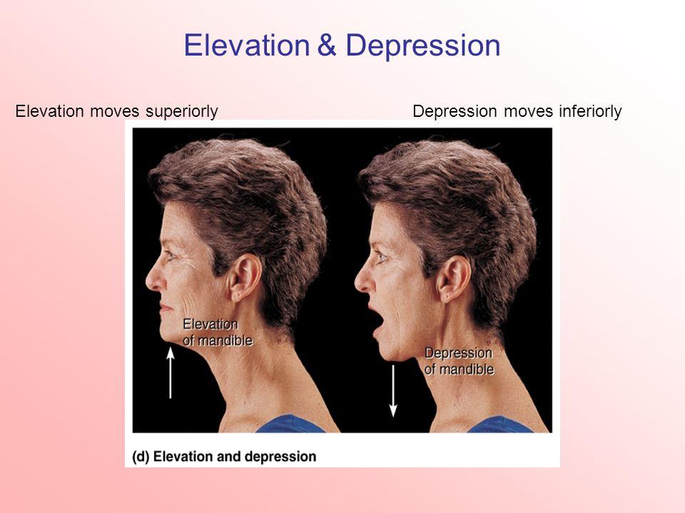 Elevation & Depression Elevation moves superiorlyDepression moves inferiorly