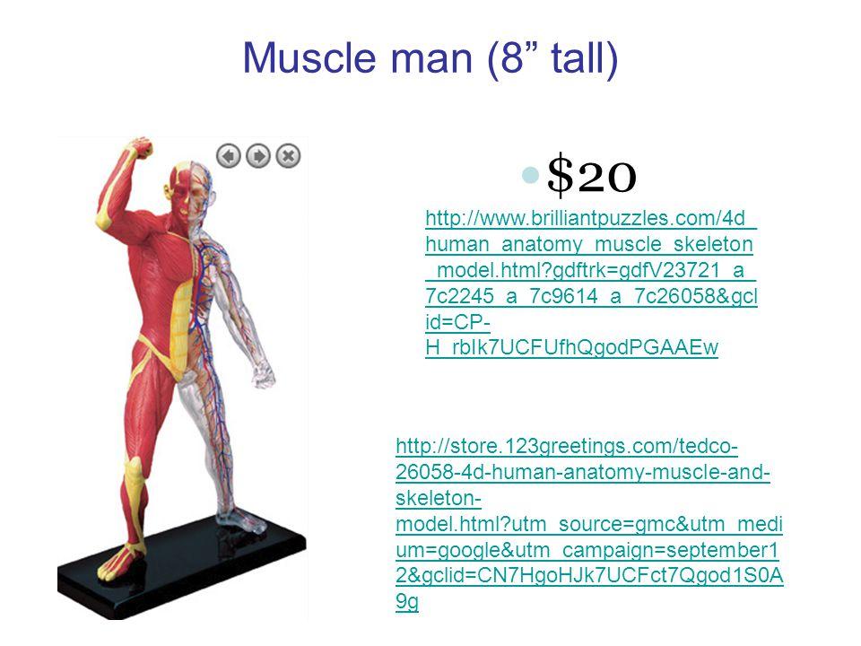 Muscle man (8 tall) http://www.brilliantpuzzles.com/4d_ human_anatomy_muscle_skeleton _model.html gdftrk=gdfV23721_a_ 7c2245_a_7c9614_a_7c26058&gcl id=CP- H_rbIk7UCFUfhQgodPGAAEw $20 http://store.123greetings.com/tedco- 26058-4d-human-anatomy-muscle-and- skeleton- model.html utm_source=gmc&utm_medi um=google&utm_campaign=september1 2&gclid=CN7HgoHJk7UCFct7Qgod1S0A 9g