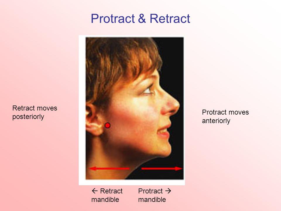 Protract & Retract Protract moves anteriorly Retract moves posteriorly  Retract mandible Protract  mandible