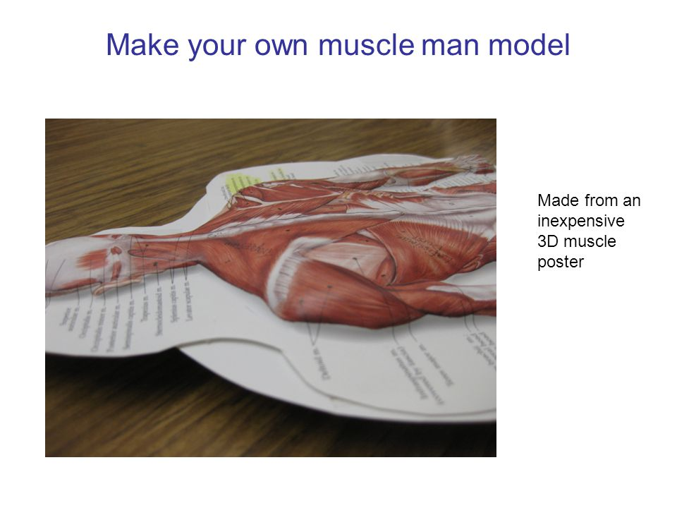 Make your own muscle man model Made from an inexpensive 3D muscle poster