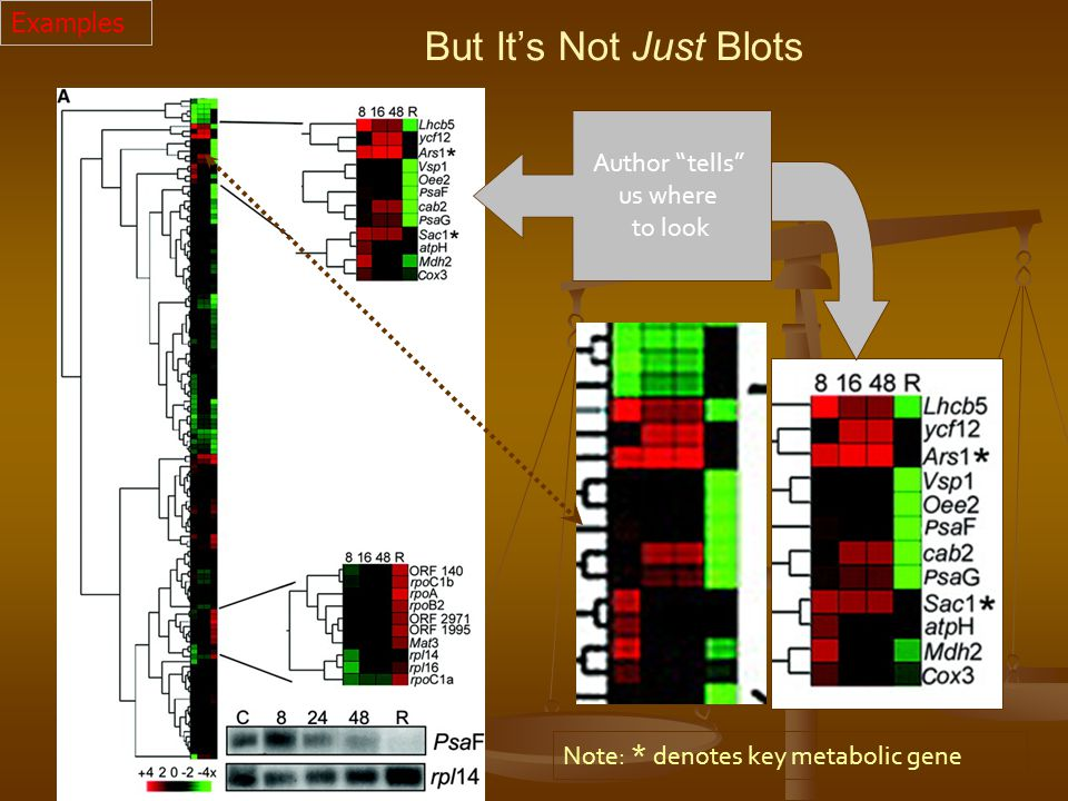 Author tells us where to look Note: * denotes key metabolic gene But It's Not Just Blots Examples