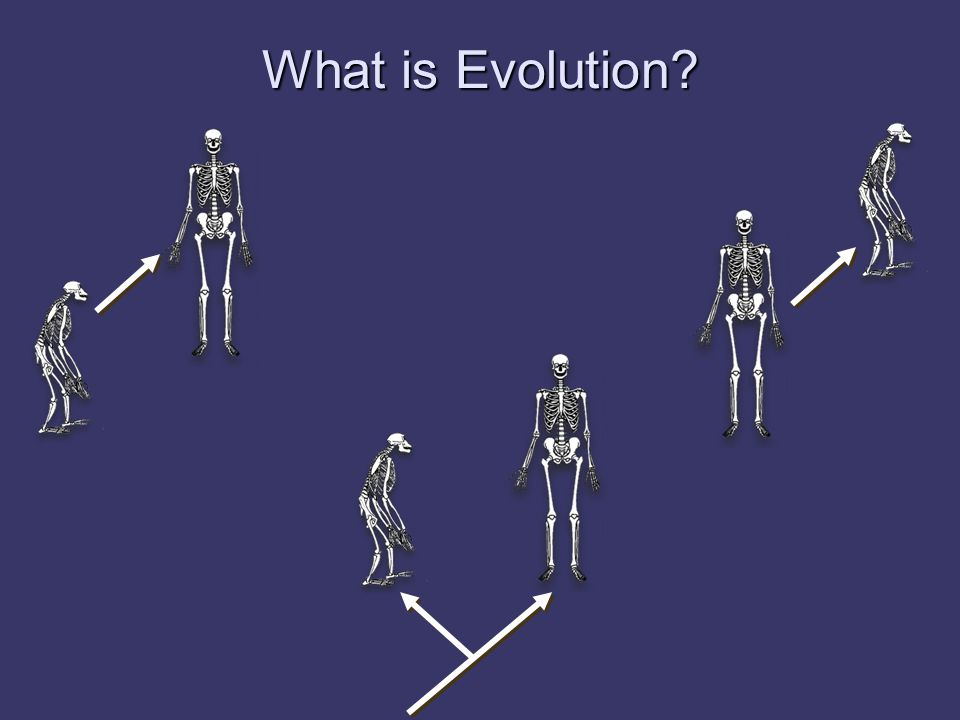 Evolution = Descent with Modification Species originate as modified descendants of other species.