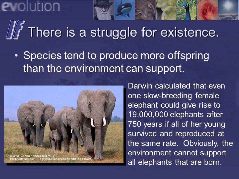 Evolution is Testable Human & Ape Chromosome Numbers 1958 Human chromosome number is 46.