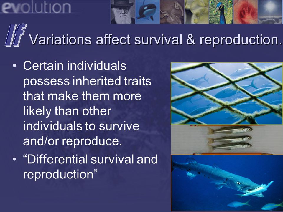 Species will change over time. Evolution in Action