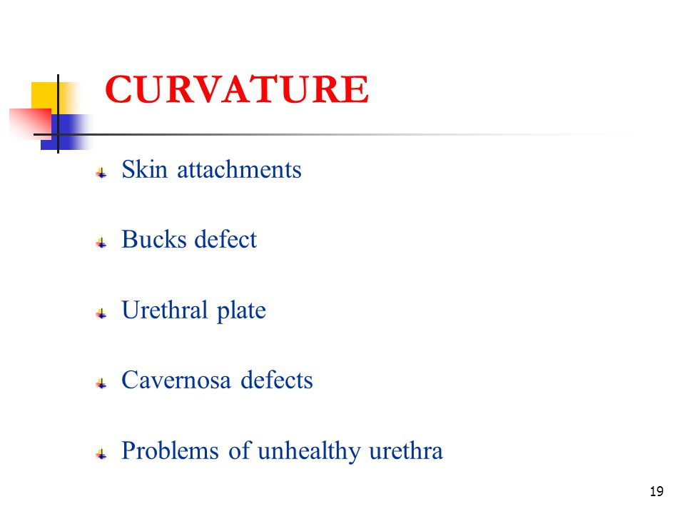19 CURVATURE Skin attachments Bucks defect Urethral plate Cavernosa defects Problems of unhealthy urethra