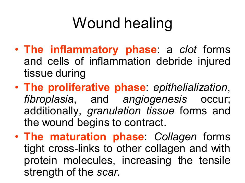 Wound healing The inflammatory phase: a clot forms and cells of inflammation debride injured tissue during The proliferative phase: epithelialization, fibroplasia, and angiogenesis occur; additionally, granulation tissue forms and the wound begins to contract.
