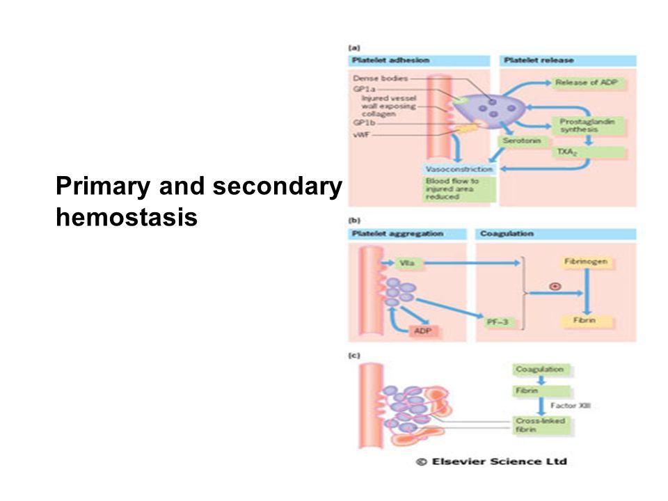 Primary and secondary hemostasis