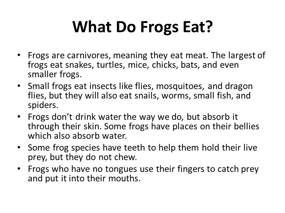 What Do Frogs Eat? Frogs are carnivores, meaning they eat meat. The largest of frogs eat snakes, turtles, mice, chicks, bats, and even smaller frogs.