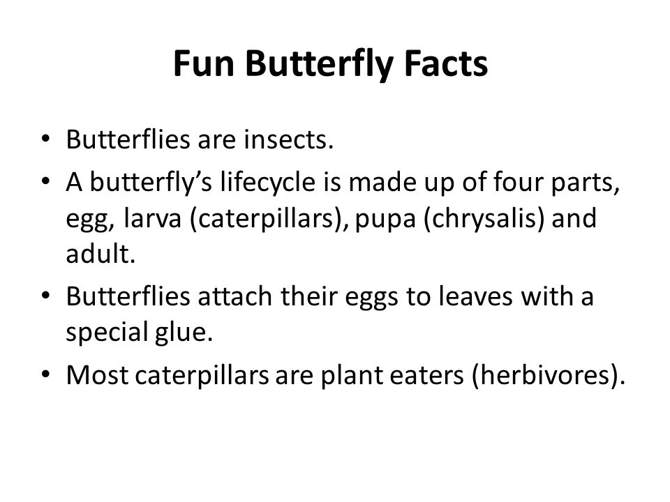 Fun Butterfly Facts Butterflies are insects. A butterfly's lifecycle is made up of four parts, egg, larva (caterpillars), pupa (chrysalis) and adult.