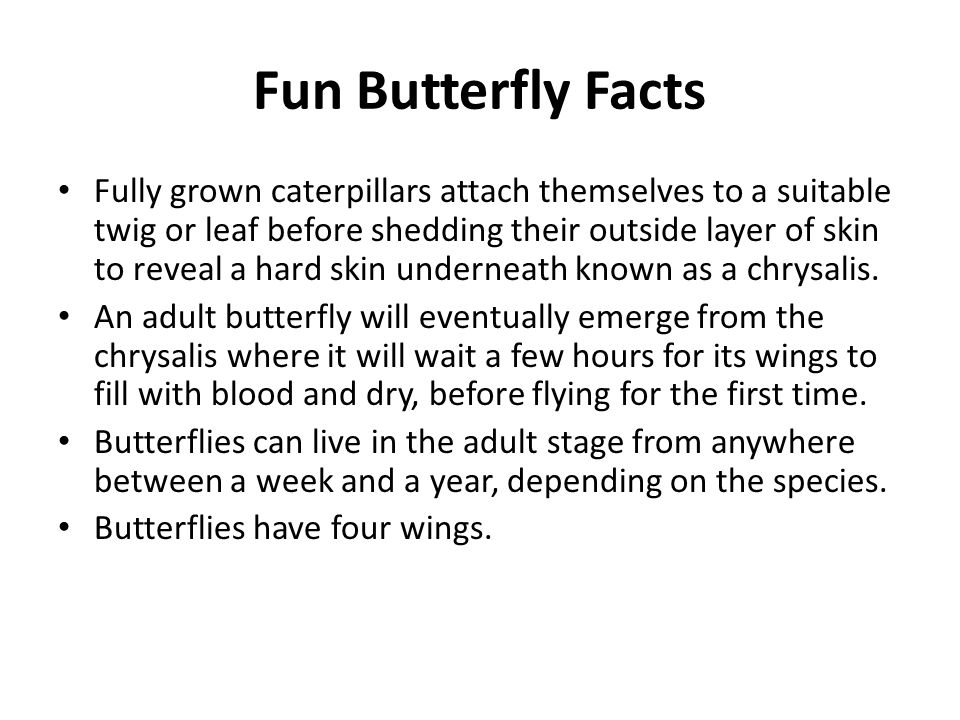 Fun Butterfly Facts Fully grown caterpillars attach themselves to a suitable twig or leaf before shedding their outside layer of skin to reveal a hard skin underneath known as a chrysalis.