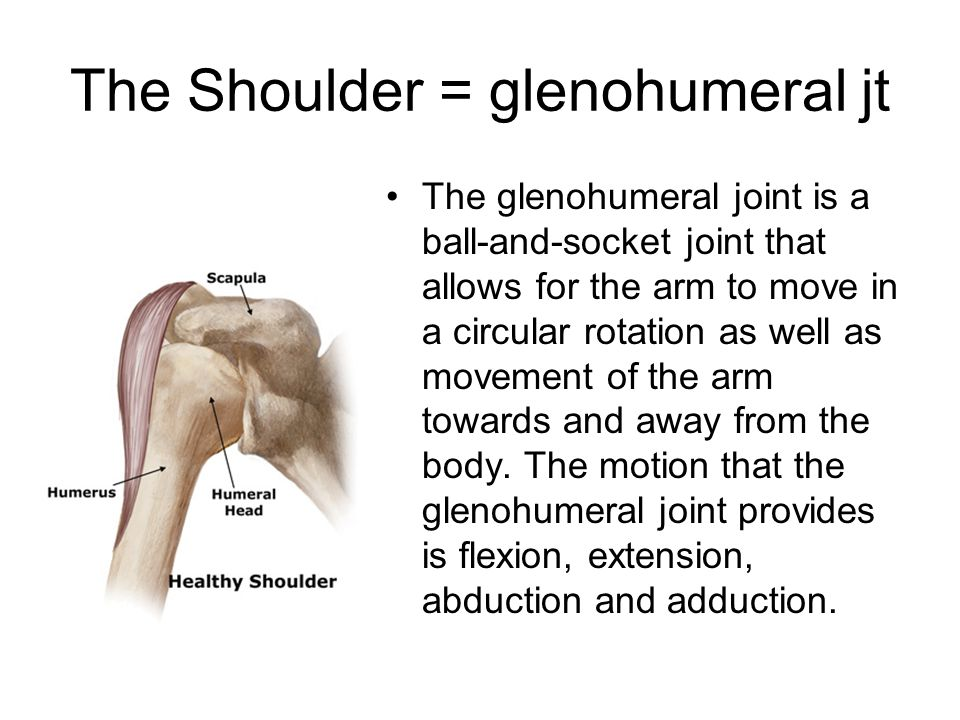 The Shoulder = glenohumeral jt The glenohumeral joint is a ball-and-socket joint that allows for the arm to move in a circular rotation as well as mov