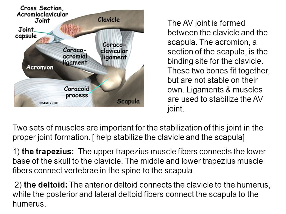 Rotator Cuff Injury injury to 1 or more of the 4 muscles in the shoulder.
