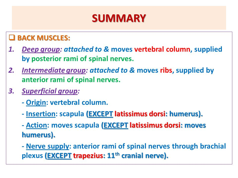SUMMARY  BACK MUSCLES: 1.Deep group: attached to & moves vertebral column, supplied by posterior rami of spinal nerves.