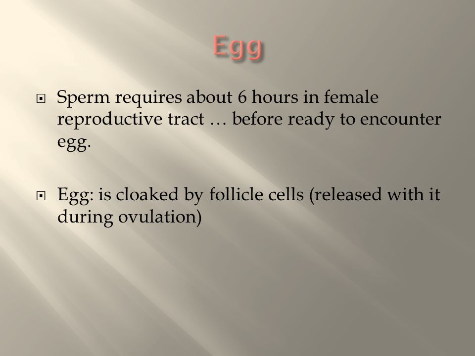  Sperm requires about 6 hours in female reproductive tract … before ready to encounter egg.  Egg: is cloaked by follicle cells (released with it dur