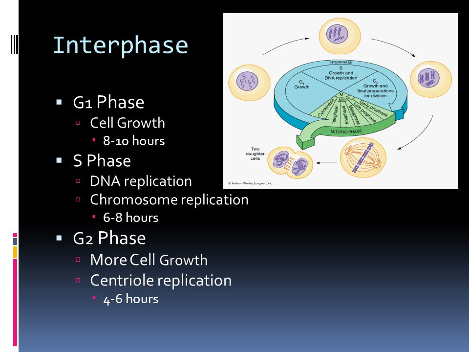 Interphase  G 1 Phase  Cell Growth  8-10 hours  S Phase  DNA replication  Chromosome replication  6-8 hours  G 2 Phase  More Cell Growth  Ce