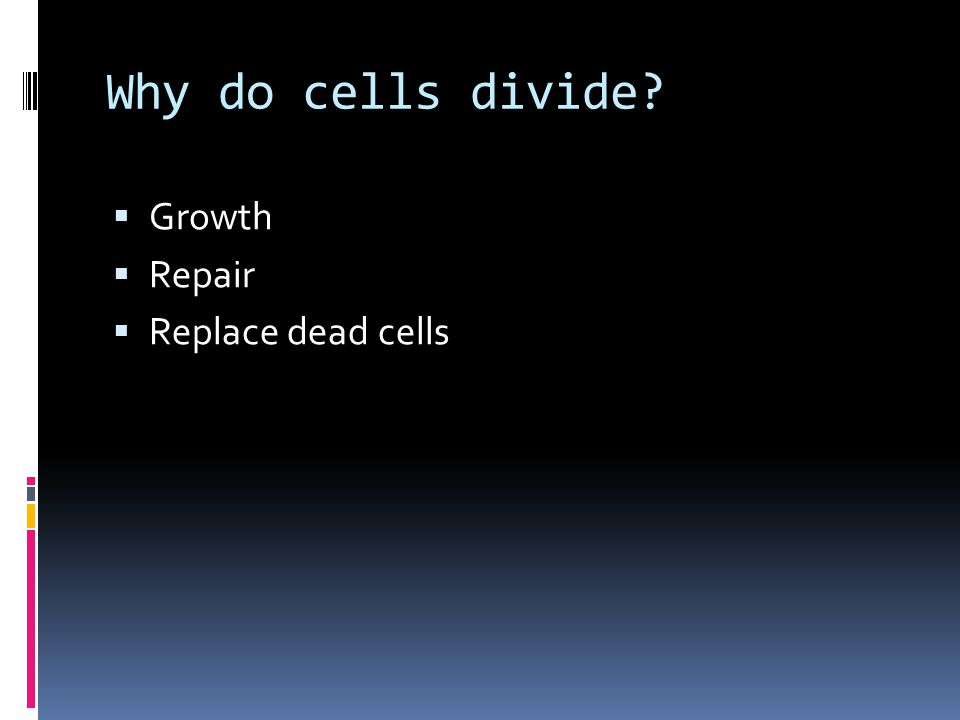 Why do cells divide?  Growth  Repair  Replace dead cells