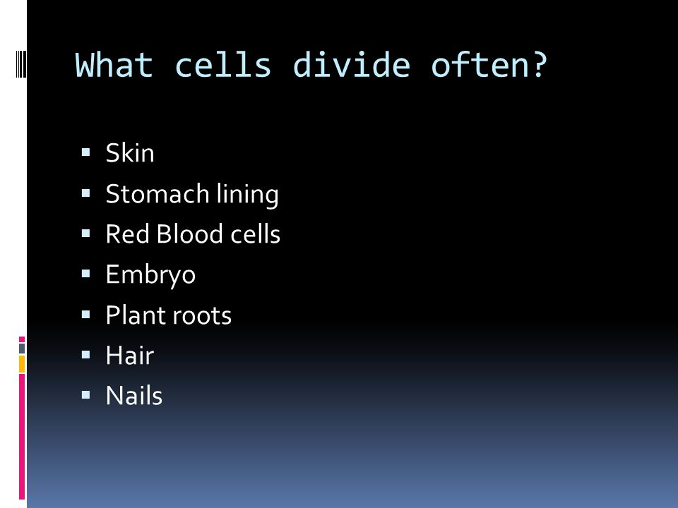What cells divide often?  Skin  Stomach lining  Red Blood cells  Embryo  Plant roots  Hair  Nails
