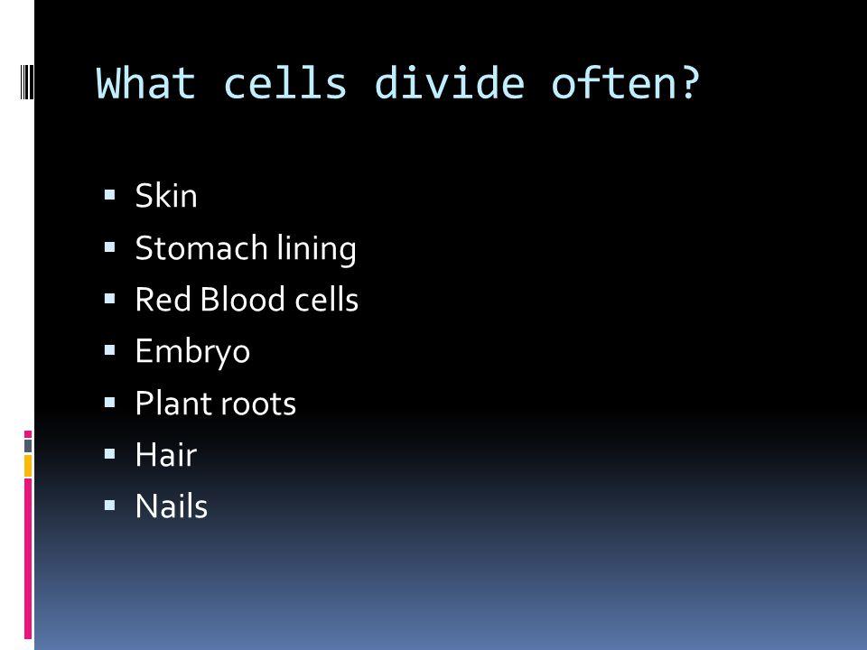 What cells rarely/never divide?  Nervous System  Liver