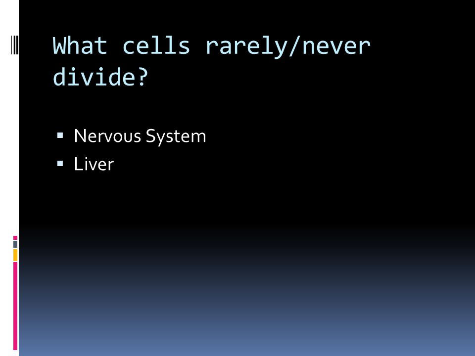 What cells rarely/never divide?  Nervous System  Liver