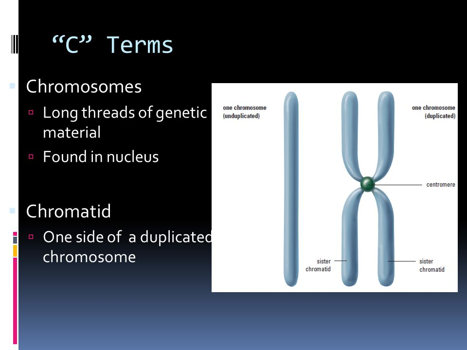 Task  Draw a diagram of mitosis  Label 6 phases & give each a short description