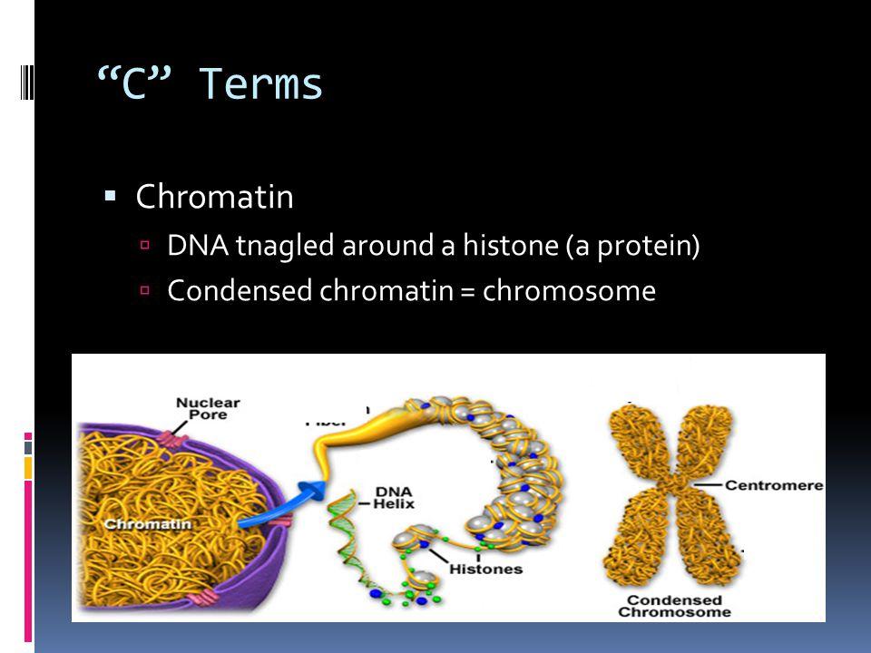 Huh? B. Chromatin A. DNA histone C. Duplicated chromosome