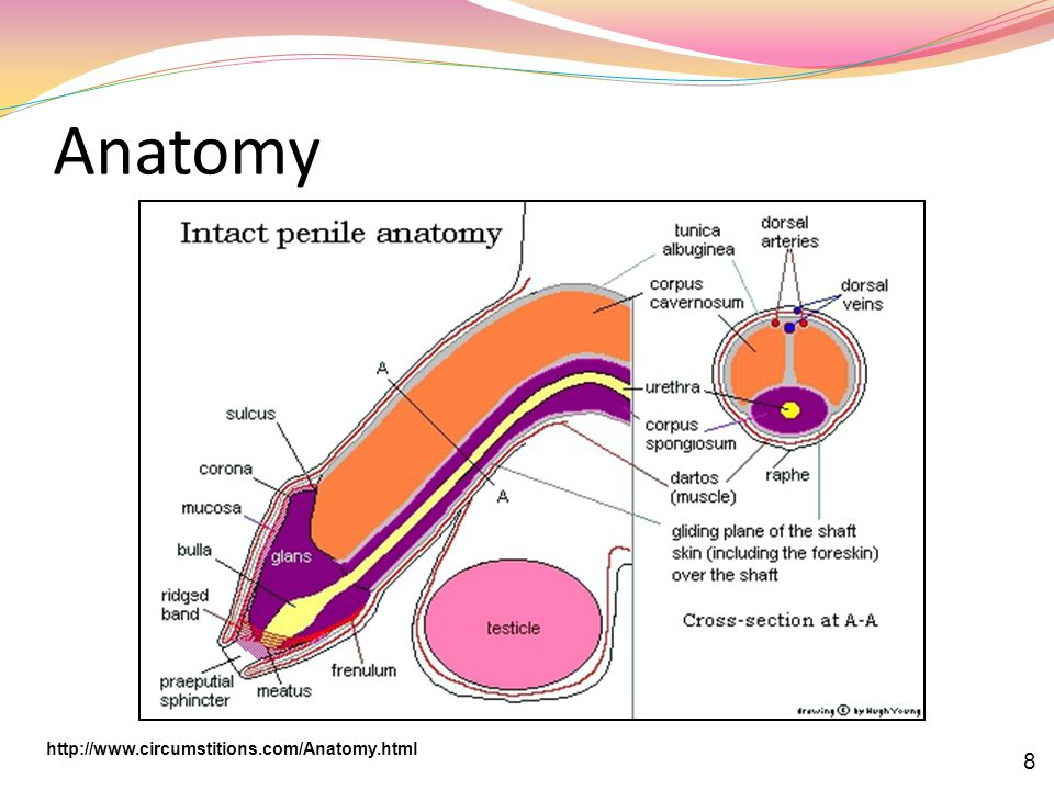 Anatomy http://www.circumstitions.com/Anatomy.html 8