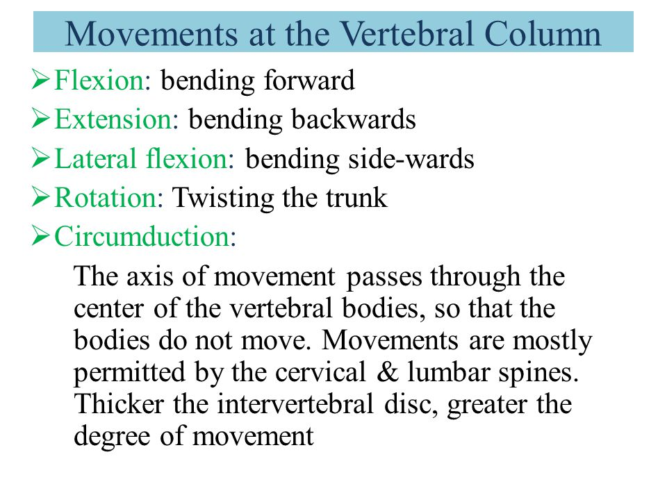Deep Intrinsic Muscles of the Back 2- Minor deep layer  Interspinales  Intertransversarii  Levatores costarum  N.S: Posterior rami of spinal nerves  Actions: Extension, rotation, lateral flexion and stabilization of vertebral column.