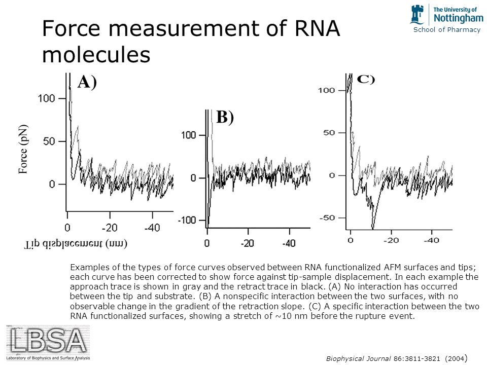 School of Pharmacy Force measurement of RNA molecules Examples of the types of force curves observed between RNA functionalized AFM surfaces and tips; each curve has been corrected to show force against tip-sample displacement.