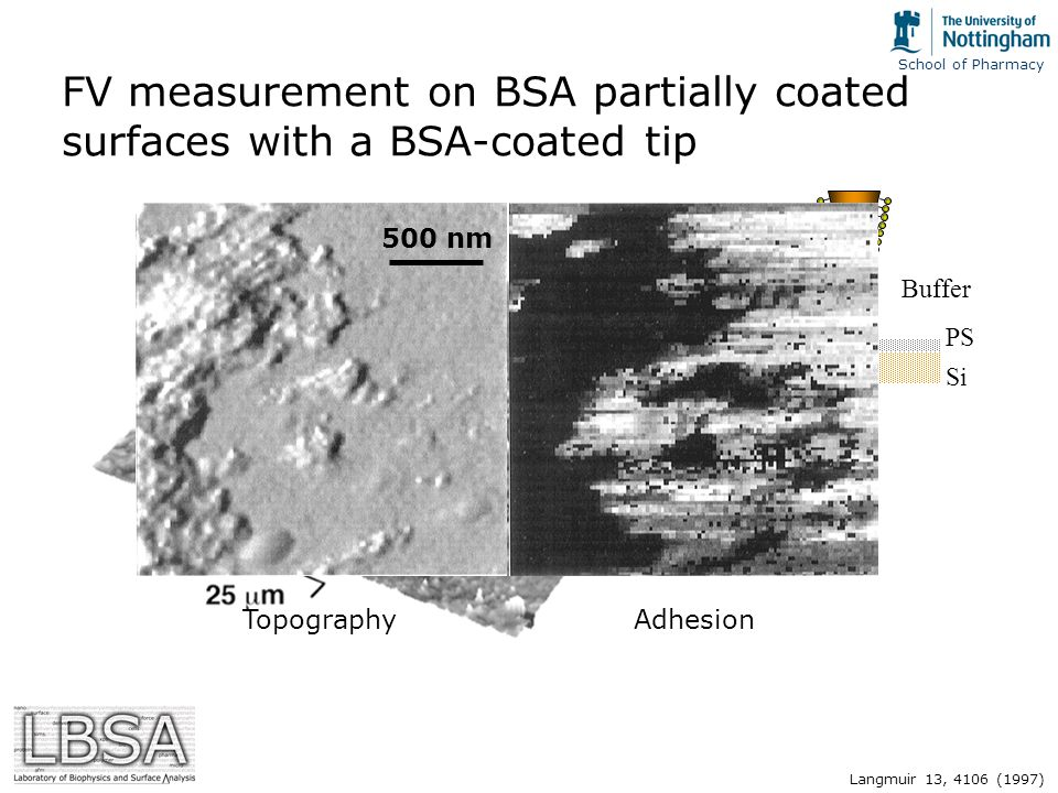 FV measurement on BSA partially coated surfaces with a BSA-coated tip Si PS BSA Buffer 500 nm TopographyAdhesion Langmuir 13, 4106 (1997)