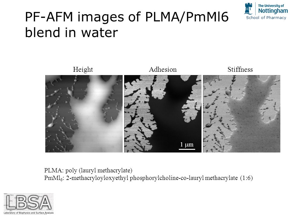 School of Pharmacy PF-AFM images of PLMA/PmMl6 blend in water PLMA: poly (lauryl methacrylate) PmMl 6 : 2-methacryloyloxyethyl phosphorylcholine-co-lauryl methacrylate (1:6) 1  m HeightAdhesionStiffness