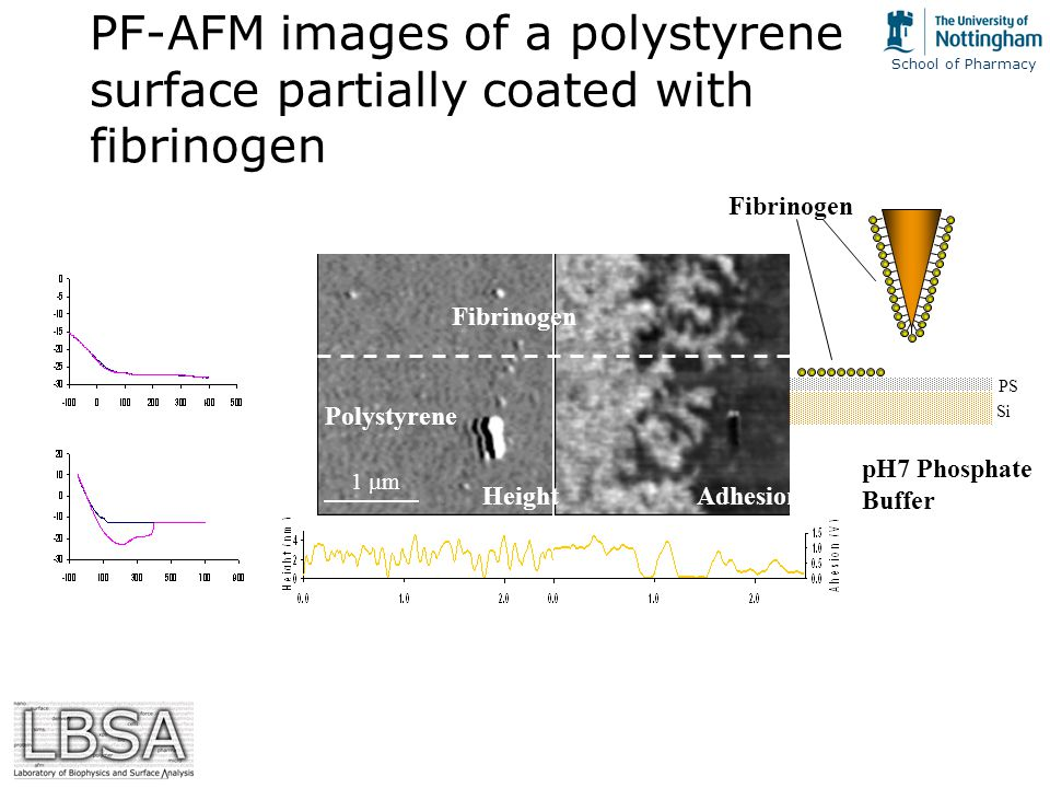 School of Pharmacy Si PS PF-AFM images of a polystyrene surface partially coated with fibrinogen Fibrinogen HeightAdhesion 1  m Polystyrene Fibrinogen pH7 Phosphate Buffer