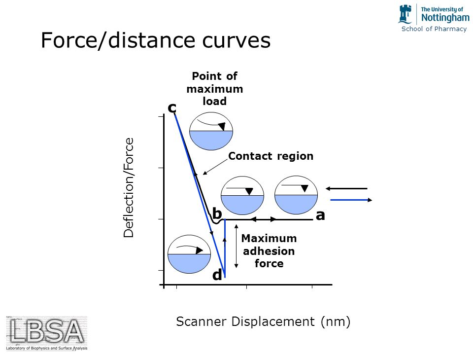 School of Pharmacy Force/distance curves Maximum adhesion force Contact region a b c d Scanner Displacement (nm) Point of maximum load Deflection/Force