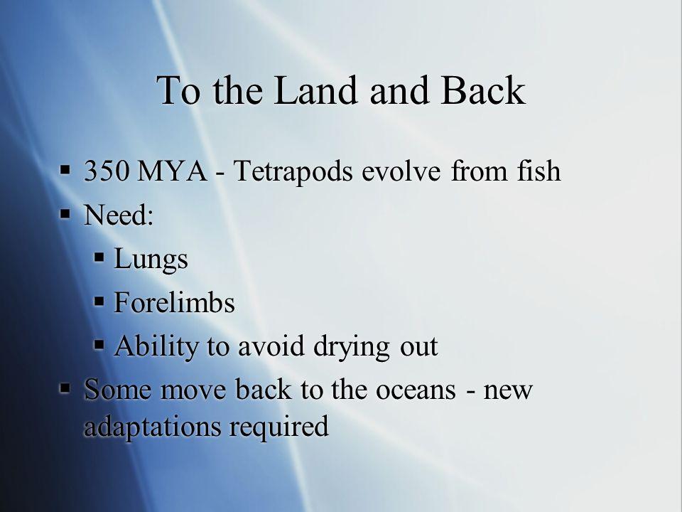 Marine Mammals, Birds and Reptiles
