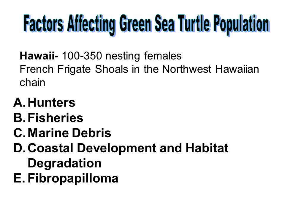 Hawaii- 100-350 nesting females French Frigate Shoals in the Northwest Hawaiian chain A.Hunters B.Fisheries C.Marine Debris D.Coastal Development and Habitat Degradation E.Fibropapilloma