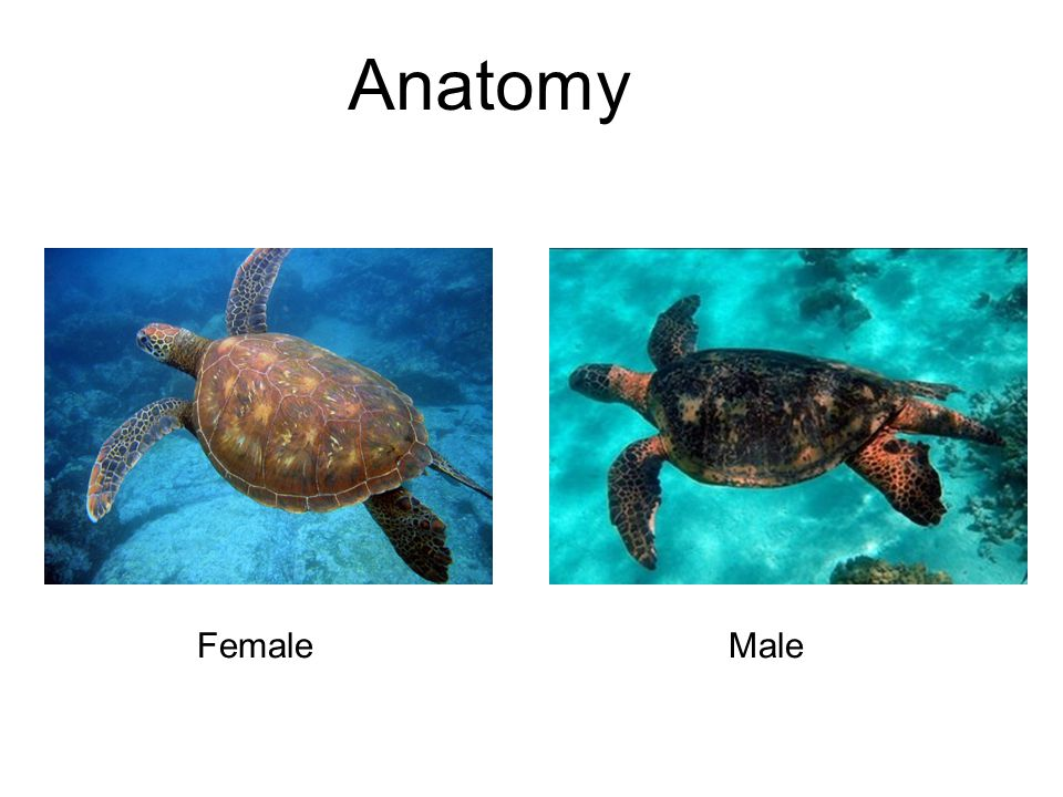 Anatomy FemaleMale