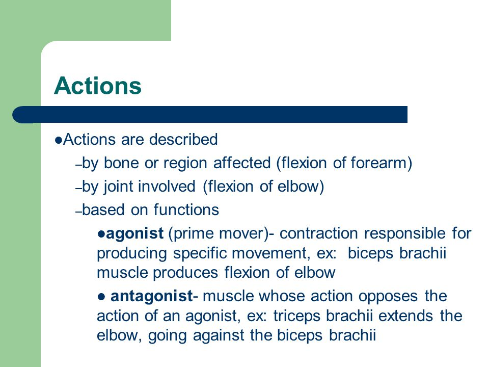 Actions Actions are described – by bone or region affected (flexion of forearm) – by joint involved (flexion of elbow) – based on functions agonist (prime mover)- contraction responsible for producing specific movement, ex: biceps brachii muscle produces flexion of elbow antagonist- muscle whose action opposes the action of an agonist, ex: triceps brachii extends the elbow, going against the biceps brachii