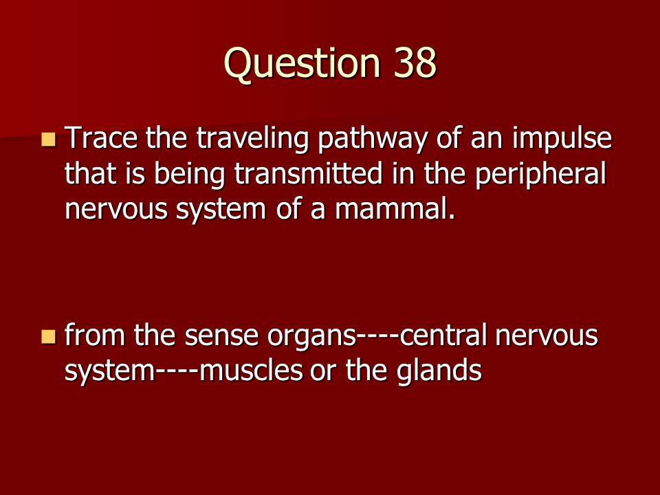 Question 38 Trace the traveling pathway of an impulse that is being transmitted in the peripheral nervous system of a mammal. Trace the traveling path