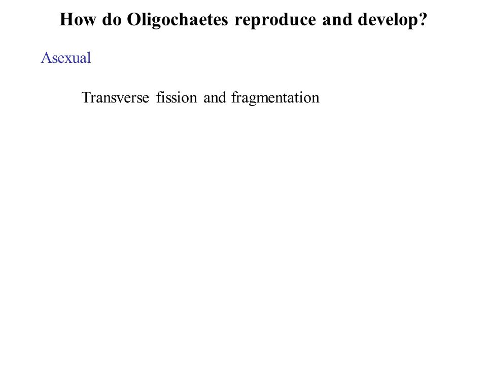 How do Oligochaetes reproduce and develop? Asexual Transverse fission and fragmentation