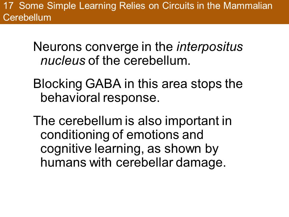 17 Some Simple Learning Relies on Circuits in the Mammalian Cerebellum Neurons converge in the interpositus nucleus of the cerebellum. Blocking GABA i