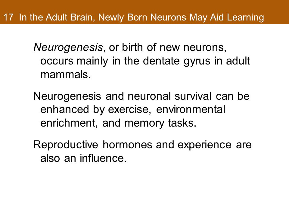 17 In the Adult Brain, Newly Born Neurons May Aid Learning Neurogenesis, or birth of new neurons, occurs mainly in the dentate gyrus in adult mammals.