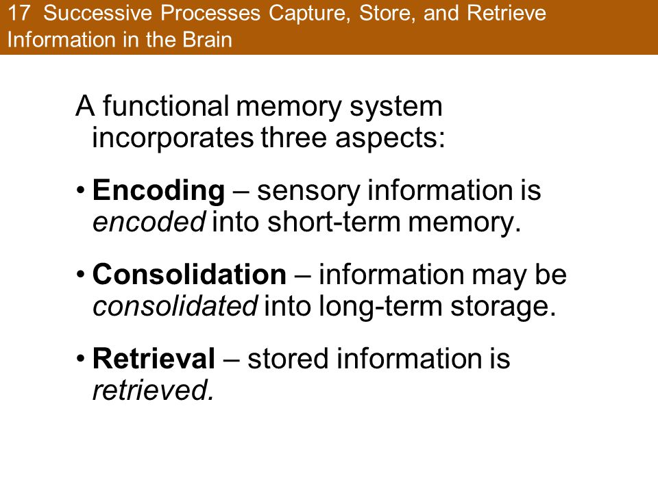 17 Successive Processes Capture, Store, and Retrieve Information in the Brain A functional memory system incorporates three aspects: Encoding – sensory information is encoded into short-term memory.