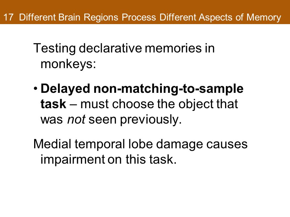 17 Different Brain Regions Process Different Aspects of Memory Testing declarative memories in monkeys: Delayed non-matching-to-sample task – must choose the object that was not seen previously.