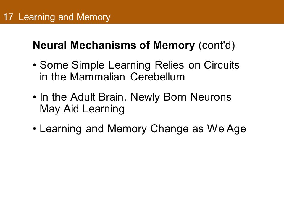 17 Learning and Memory Neural Mechanisms of Memory (cont'd) Some Simple Learning Relies on Circuits in the Mammalian Cerebellum In the Adult Brain, Ne
