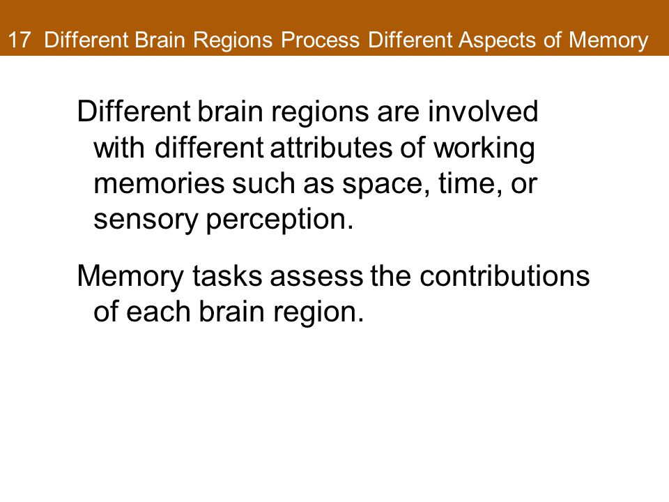 17 Different Brain Regions Process Different Aspects of Memory Different brain regions are involved with different attributes of working memories such as space, time, or sensory perception.
