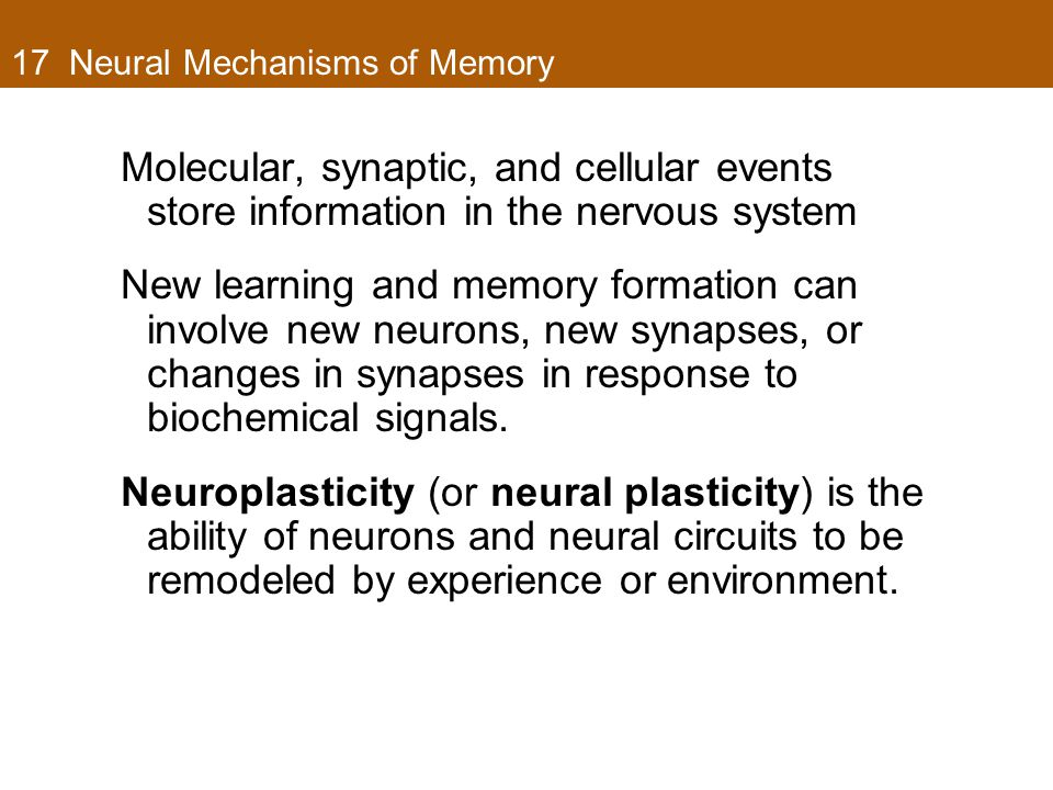 17 Neural Mechanisms of Memory Molecular, synaptic, and cellular events store information in the nervous system New learning and memory formation can