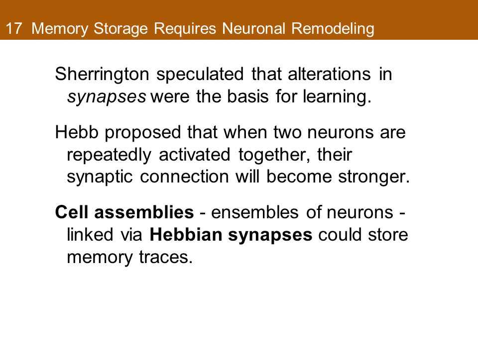 17 Memory Storage Requires Neuronal Remodeling Sherrington speculated that alterations in synapses were the basis for learning.